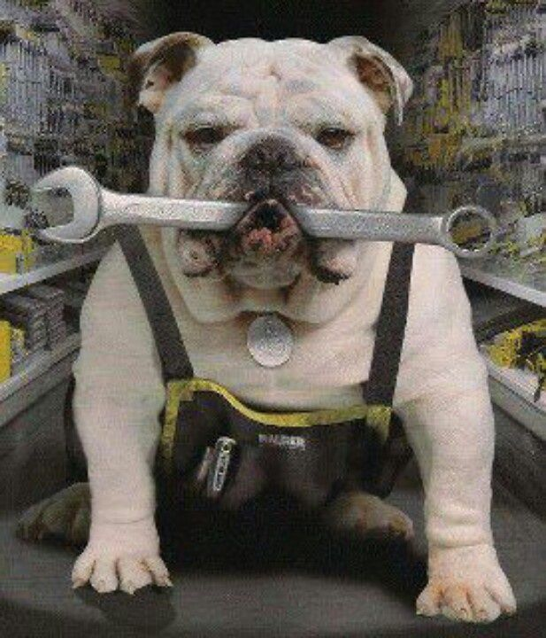 Bulldog with wrench
